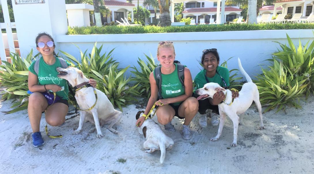 Tre volontärer på en volontärresa utomlands hjälper till med att rehabilitera hemlösa hundar på shelter.